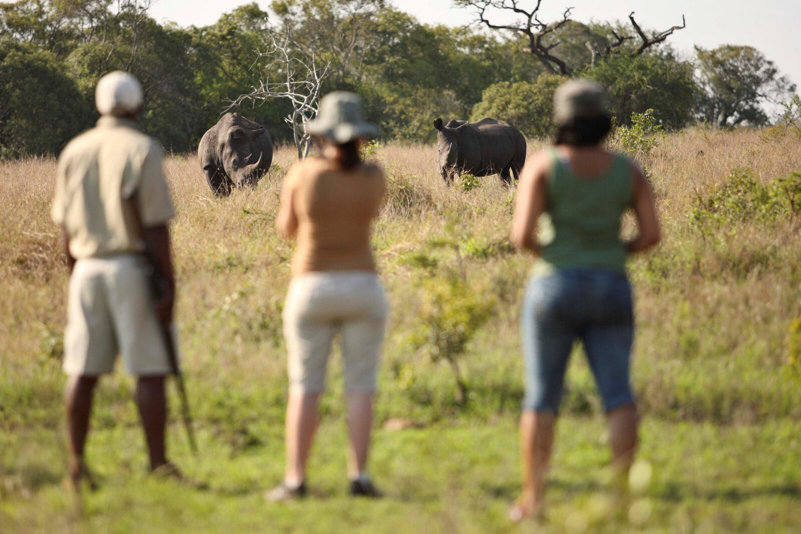 You dream of wild and exotic Tales from Africa