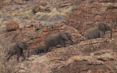 Ecotour National Parks of South Africa