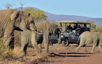 City of Gold & Safari in the Bush 6-day city-break from Tales from Africa Travel