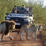 What you need to know before choosing a safari