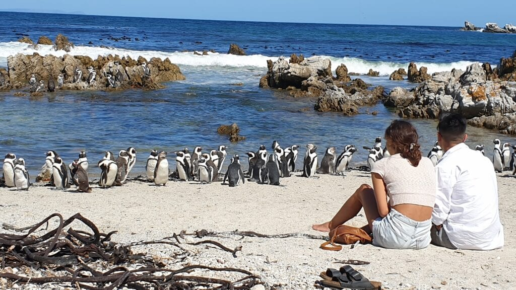 blog Tales-from-Africa-Travel South-Africa Namibia penguins-in-Africa African-Wildlife