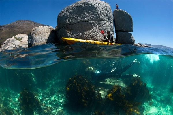 Marine-Experiences-inspired-by-My-Octopus-Teacher-Tales-from-Africa-Travel-city-break