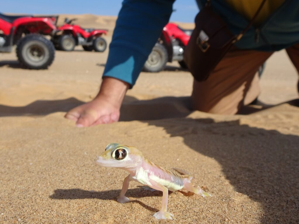 Life between desert and sea - North Namibia tour