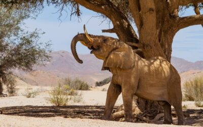 desert-elephant-resized-Tales-from-Africa-Travel-Life-between-desert-and-sea-North-Namibia-tour.